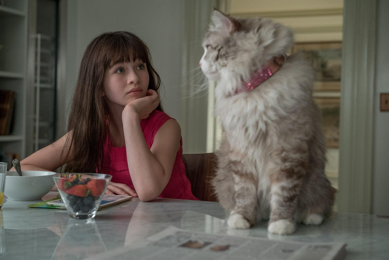 Фильм девять жизней кота